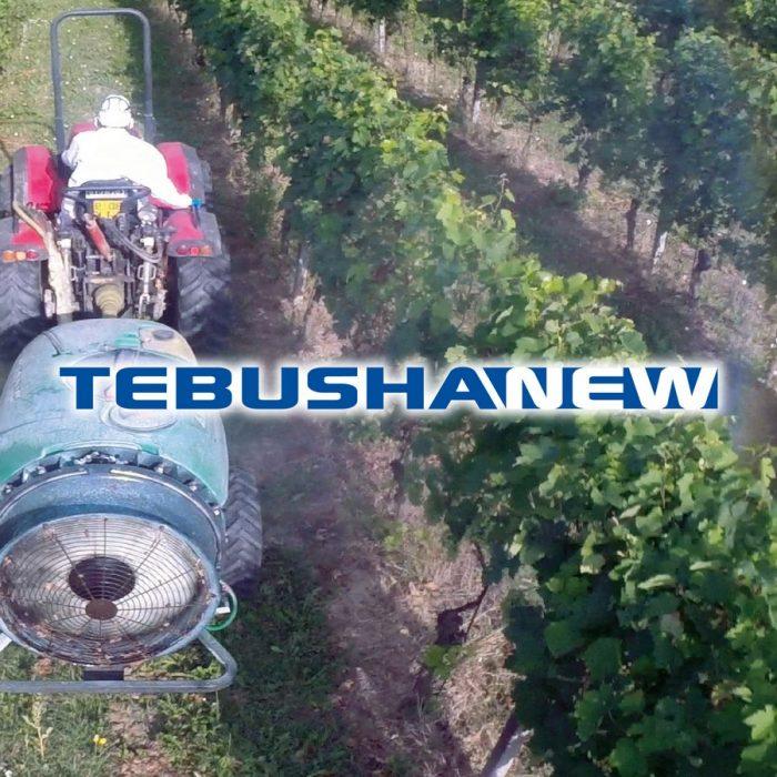 TebushaNew