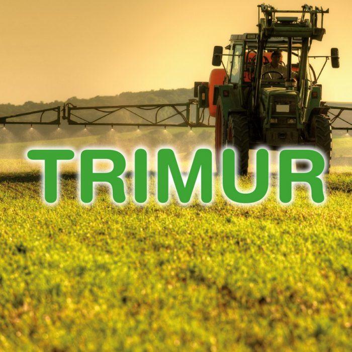 Trimur