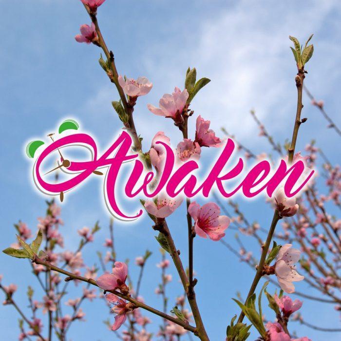 s_Awaken - Copia