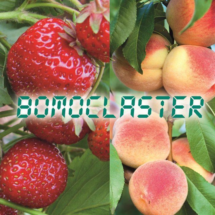 s_Bomoclaster_Prodotto
