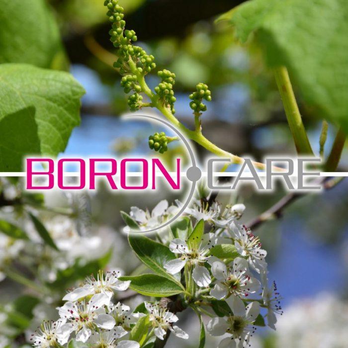 s_BoronCare - Copia