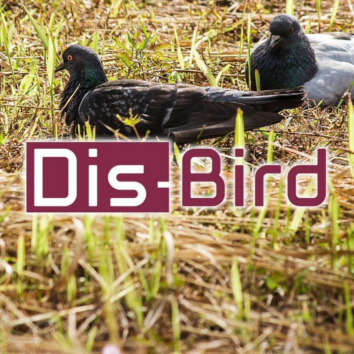 s_DisBird