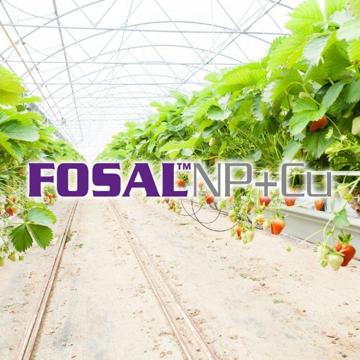 s_Fosal NP+Cu
