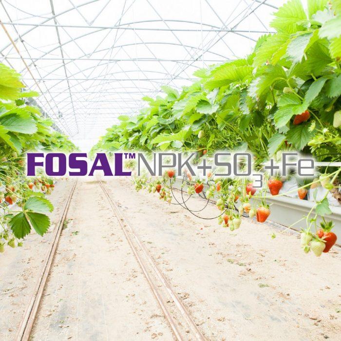 s_Fosal NPK+SO3+Fe
