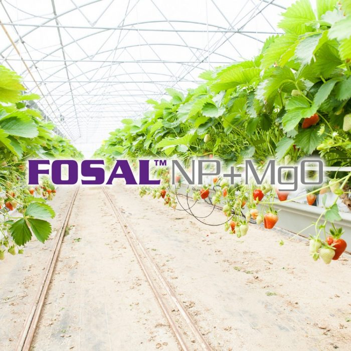 s_Fosal NP+MgO