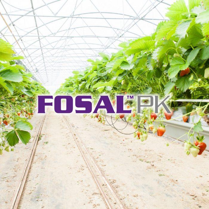 s_Fosal PK