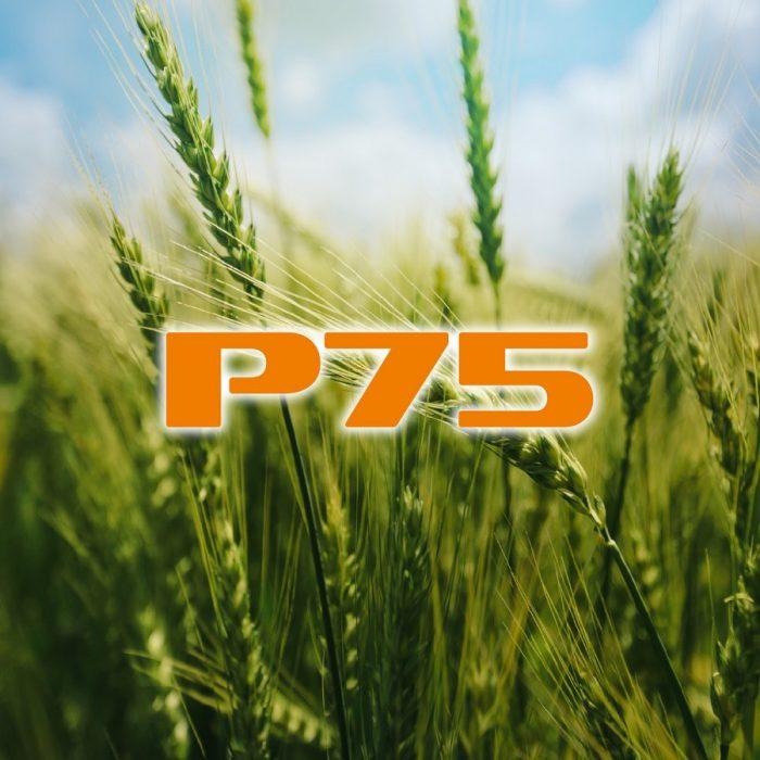 s_P75