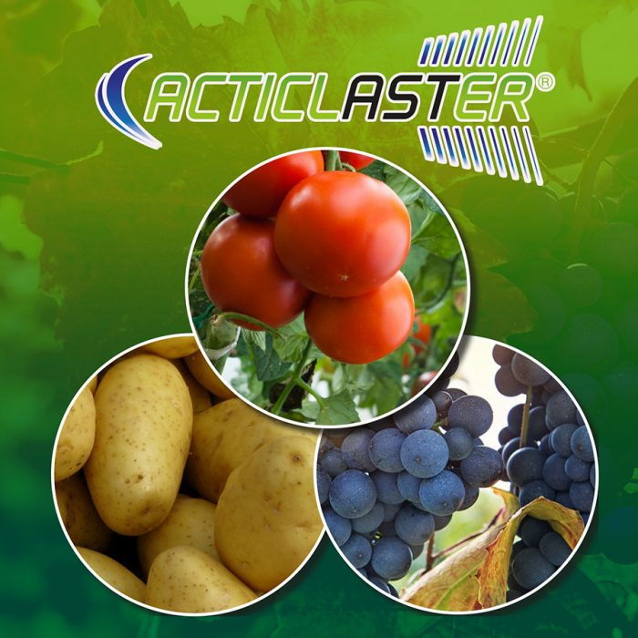 Acticlaster_m