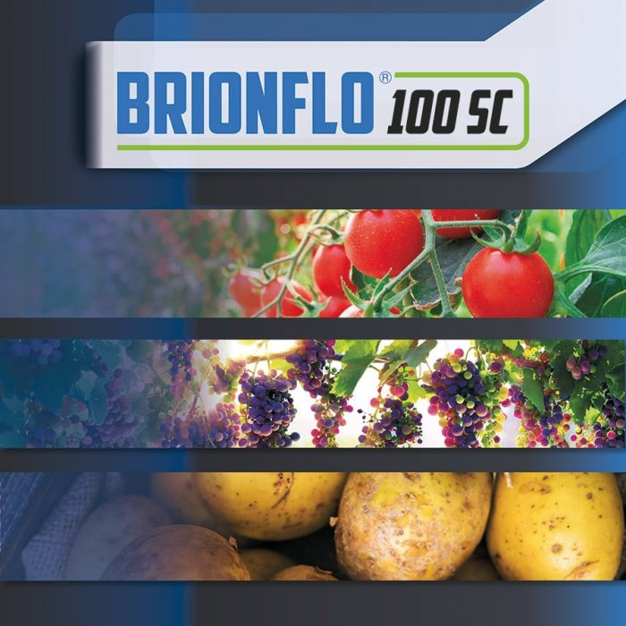 Brionflo_Copertina-2020